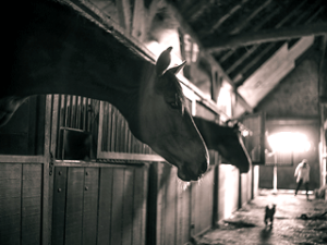 Stable-aisle-(BW)