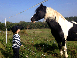 boy-looking-at-horse