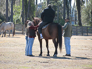 equine-therapy3